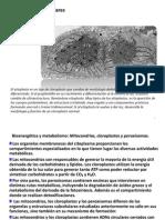 ESTRUCT Subcelulares Membranosas II