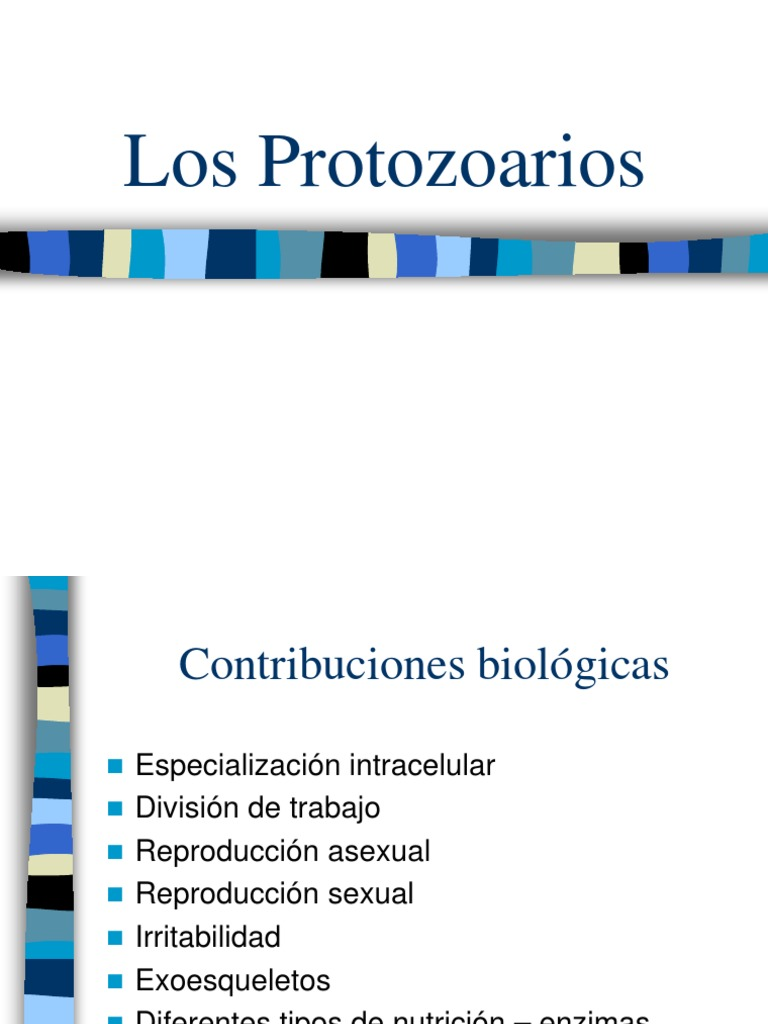Phylum mastigophora reproduccion asexual en