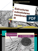ESTRUCTURAS Subcelulares Membranosas III