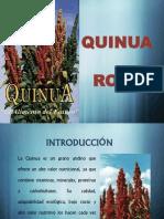 Cultivo de La Quinua Roja