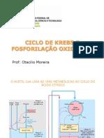 Ciclo de Krebs e fosforilação oxidativa