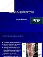 Osteichtyes Reproducere