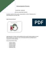 2_Glomerulopatias Primarias