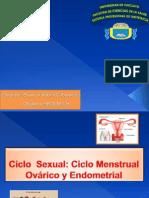 Ciclo Menstrual s