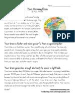 Your Amazing Brain