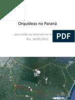 Orquídeas no Paraná