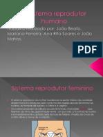 O Sistema Reprodutor Humano