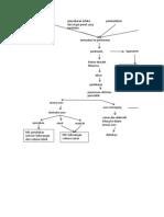 Pathway Peritonitis