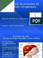 9. Formación de productos de excreción nitrogenados
