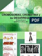 Cromosomas Cromatina y Su Desarreglo