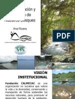 Deforestacion en Quiche - Fundacion Calmecac