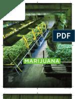 Marijuana Inc - GQ Australia - Aug13