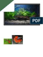 Ikan hiasan