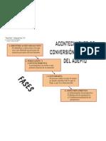 3 fases de conversión