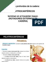 Musculos de La Cadera 6