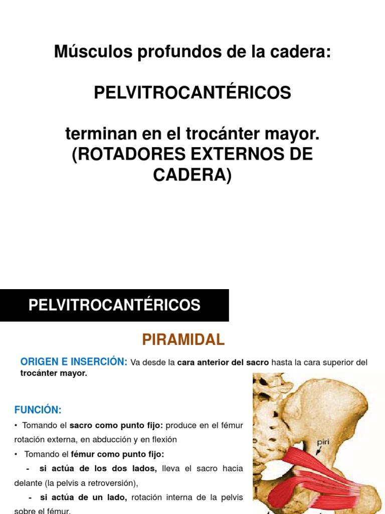 musculos rotadores laterales de la cadera