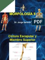 Morfologia II 2010