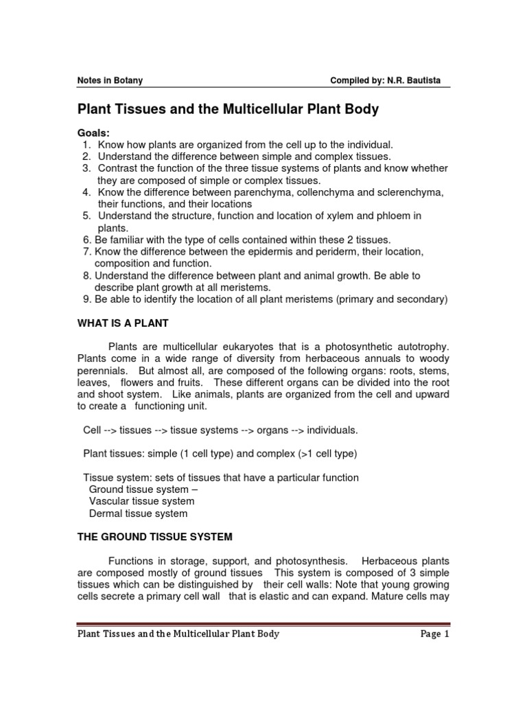 Plant Tissues and the Multicellular Plant Body | Tissue (Biology) | Bark