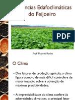 2_A cultura do Feijão_II