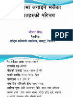 Maize Varieties in Nepal