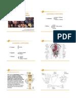 Anatomia Aula Resumida