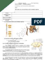 Ficha de Trabajo 4 Sistema Nervioso 2013