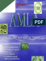 Amla Cultivation -Eswara Reddy