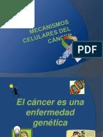 MECANISMOS CELULARES DEL CÁNCER anato.ppt