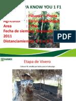 Papaya Knys - Tarapoto