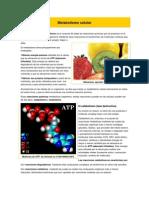 Metabolismo celular.docx