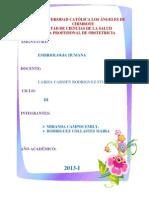 Investigacion Formativa III Embriologia