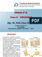 15.  Ribosomas