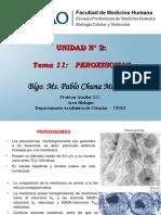 19.  Peroxisomas