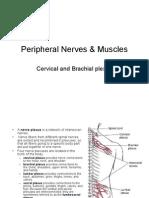 Periphl Ner, Mus, Cervical, Brachial Plexus