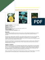 Gradinarit-in-Orice-Anotimp-5-Cunostinte-Fundamentale pdf