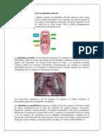 Anomalías congénitas  de la lengua