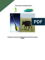 Estructura Del Proyecto Parasitosis