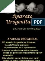 46 Aparato urogenital 1