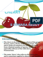 Cherry Production Sereddy