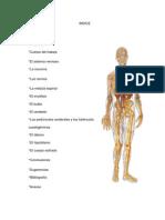 Sistema Nervioso Monografia