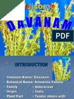 DAVANAM (Artemissia Palance)-SEREDDY