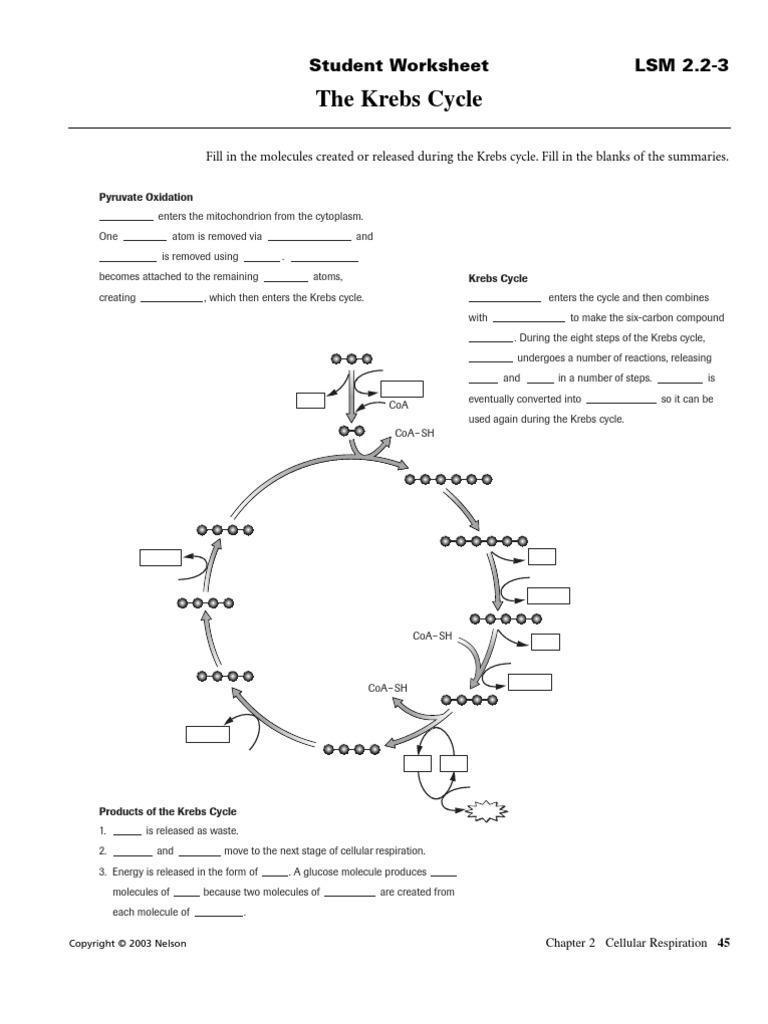worksheet. Carbon Compounds Worksheet. Grass Fedjp ...