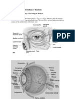 Visual Perception Disturbances Handouts.doc- Students