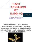 Horticultural Plant Propagation by Budding -Eswar