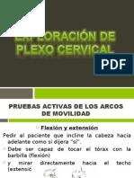 Exploracion Neurologica de Cervicales