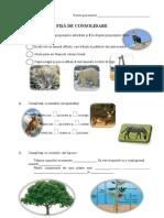 Consolidare Animale Si Plante