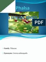 Phalsa-seed to Fruit