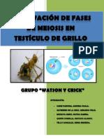 OBSERVACION DE FASES DE MEIOSIS EN TESTÍCULO DE GRILLO