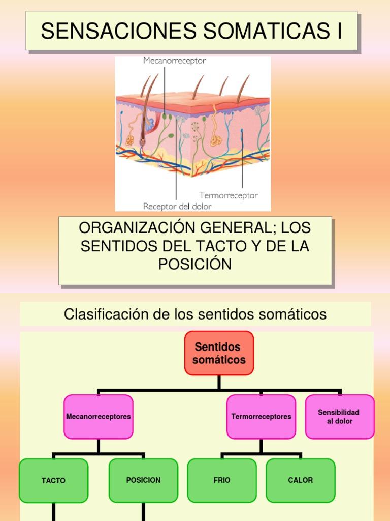 Clase 05 Sensaciones Somaticas I_tacto y Posicion