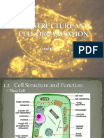 Cell Structure And